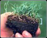 Shallow Lawn Thatch