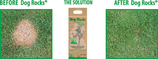Dog Rocks - The Solution to Pet Urine Burns in Lawns