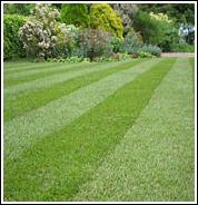Lawn Turf Supplier