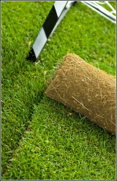 Turf - The Lawn Shop Turf