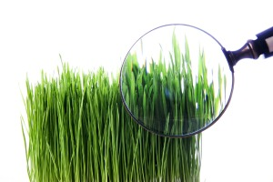 Grass Clippings - Lawn Advice