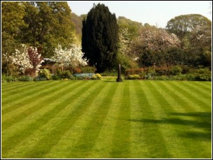 Grassclippings - When to Start Mowing Lawn