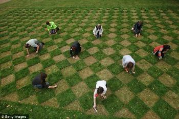 Grassclippings - Checker Board in Lawn