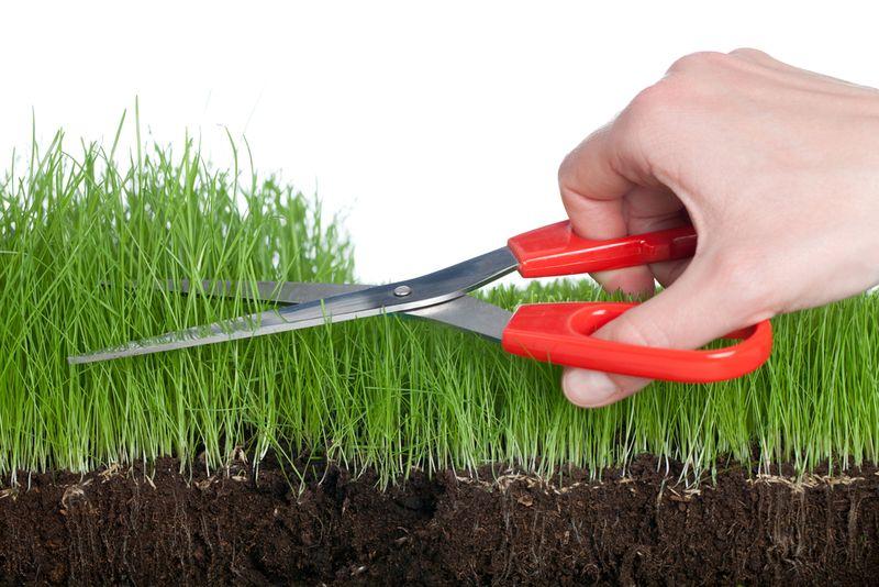 Grassclippings - Editor talks to BBC