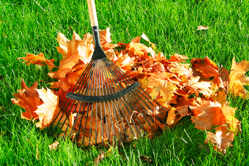 Grassclippings - Autumn Lawn Care Tips