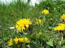 Weed Free - Weeds