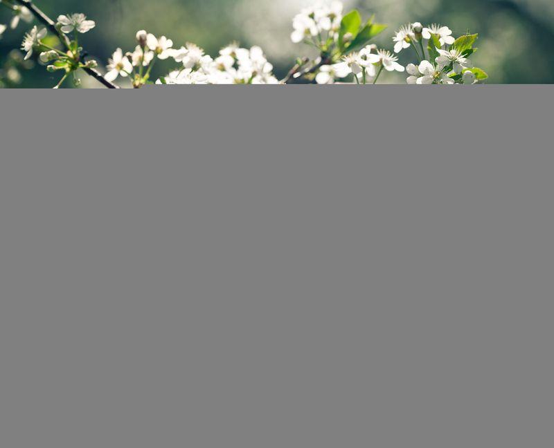 Grassclippings - Spring Gardening