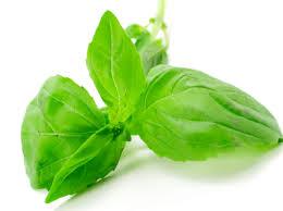 Weed Free - Herbal Medicines