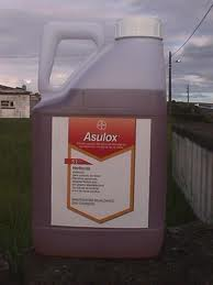 Weed Free - Asulox Bracken Control