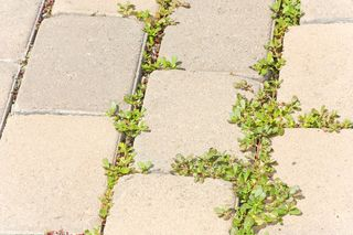 Grassclippings - Weed Control
