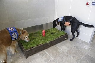 Grassclippings - Airport Toilet for Dogs