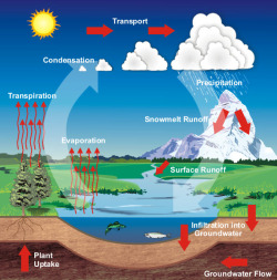 Grass Clippings - The Hydrological Cycle