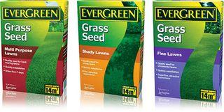 Grass Clippings - EverGreen Grass Seed