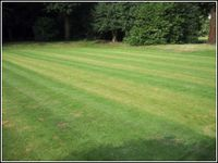 Grass Clippings - Lawn Fertiliser
