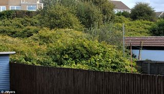 Weed Free - Japanese Knotweed Problem