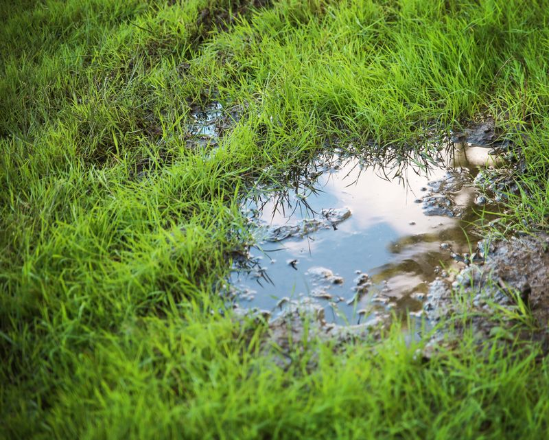 Grass Clippings - Puddles on Lawn