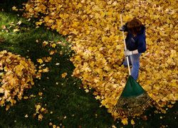 Grass Clippings - Autumn Leaves on the Lawn