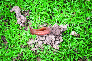 Grass Clippings - Solving Worm Casts