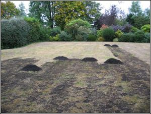 Grass Clippings - Top Dressing Process