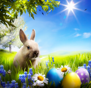 Grassclippings - Easter Lawn Care