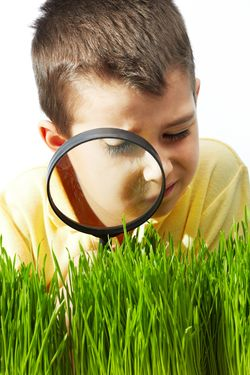Lawn Consultancy