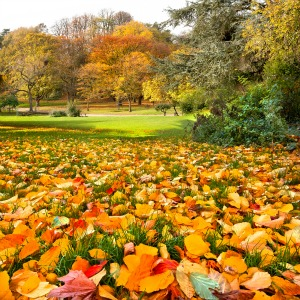Grassclippings - Autumn Lawns