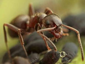 Grassclippings - Ant Invasion