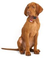 Grassclippings - Dog Urine Burns