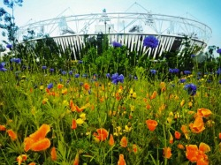 Grassclippings - Olympic Park's Floral Meadows
