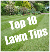 Top 10 Lawn Tips