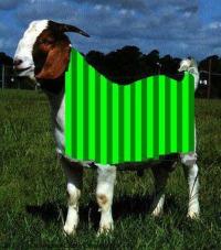 Wembley Scape Goat