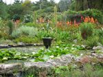 Tresco_abbey_gardens1