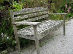 Tresco_abbey_gardens_lichen_bench