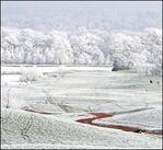 Frosty_grass