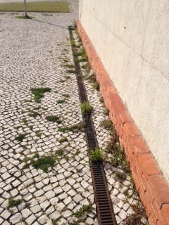Weed Free - Weed Killing Services
