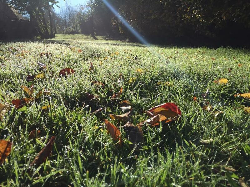 Grass Clippings - Autumn leaves attracting Earthworm activity