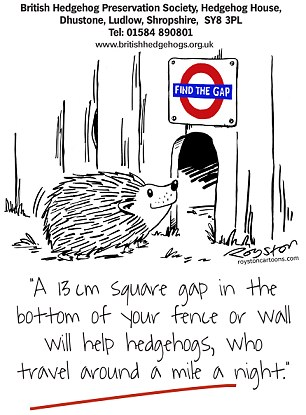 Grass Clippings - Hedgehogs