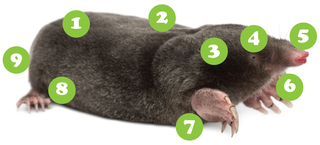 Know All About Moles
