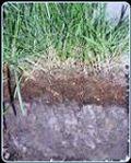 Deep Lawn Thatch
