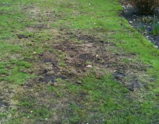 Grassclippings - Lawn Renovation