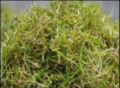 Moss Control in Lawns