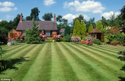 Grass Clippings - Lawns a Thing of the Past