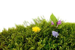 Grassclippings - Moss