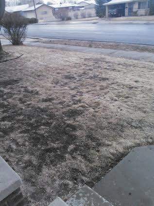 Grass Clippings - Utah USA Lawn