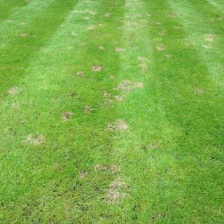 Grass Clippings - Read Thread Disease Overview