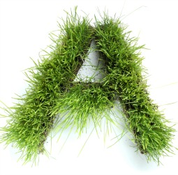 Grass Clippings - A Levels