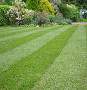 Lawn Turf Supplier