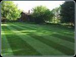 Striped_lawn