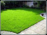 Renovate a Lawn 4