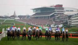 Grass Clippings - Cheltenham Race Course